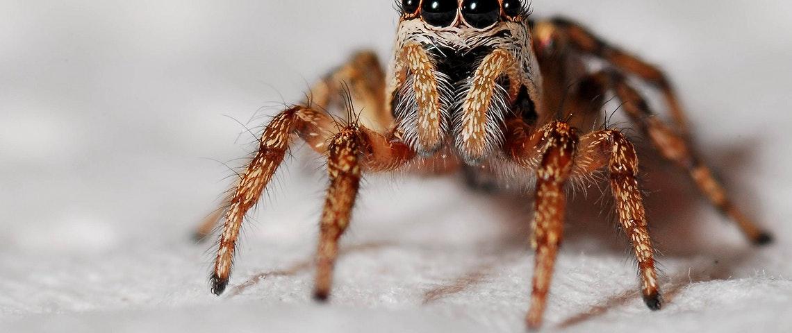 Er zitten meer spinnen in je auto dan je denkt!
